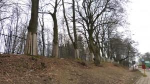 drzewa_ogrodzenie