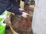 Bluszcz w wąwozie JPII - ocieplenie korą i mozaiki