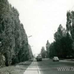17442 aleja drzew